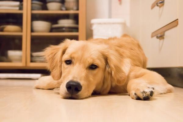 愛犬の健康管理