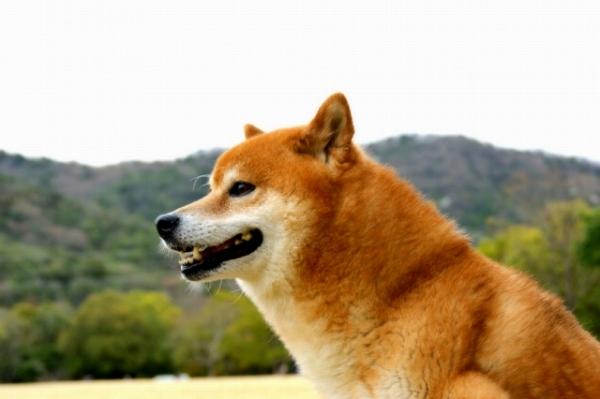 犬の寿命とアンチエイジング
